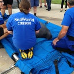 Florida manatee count sets another record
