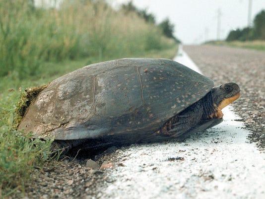 Threatened Turtles