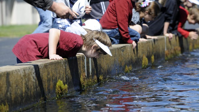 This scene will be played out over and over again at the Hatchery Outdoor Adventure on Saturday as kids try to get up close and personal with trout in the raceways of Norfork National Fish Hatchery.