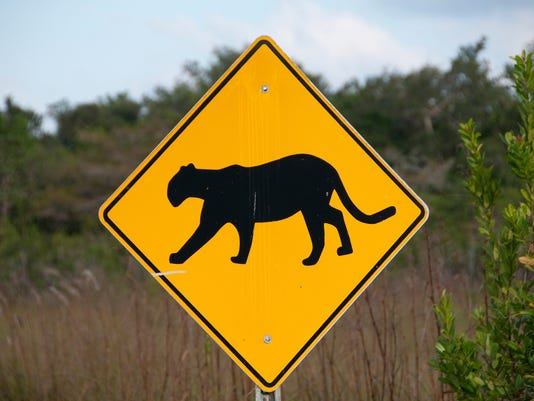 iStock panther sign