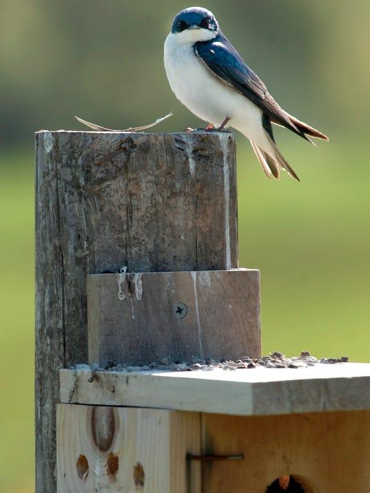 Touring Blackbird watershed
