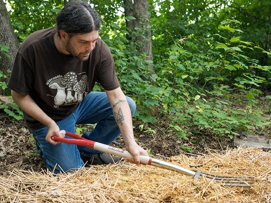 Tavis Lynch cultivates mushrooms on his farm in Cumberland.