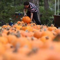 Seven tips for finding the best pumpkins at the patch