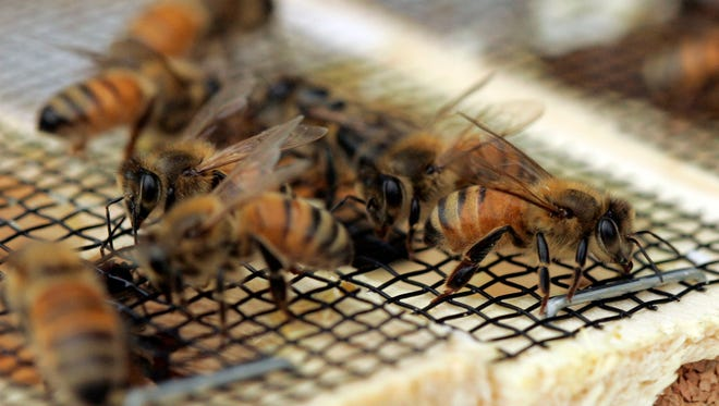 Manitowoc County Beekeepers Association will meet at 6 p.m.