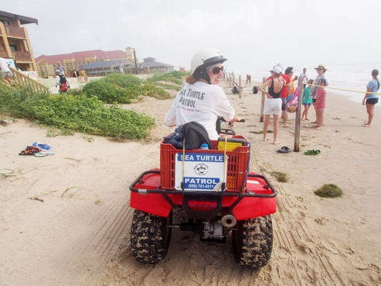 A volunteer from Sea Turtle Inc. uses an ATV to patrol the beach at South Padre Island. The star resident is Allison, who lost three flippers in a predator attack as a baby. You can watch her zip around her tank with the help of a prosthetic rudder.