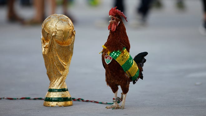 A pet rooster named Paquita Fred stands next to a replica of the World Cup trophy in front of Maracana stadium, in Rio de Janeiro, Brazil, Wednesday, June 11, 2014. The 11 year old rooster wearing a cape with the colors of the Brazilian national soccer team and a medallion of the local Fluminense soccer club gets his name from Fred, the Brazilian footballer who plays as a striker for Fluminense and is now one of the members of the national soccer team. The World Cup soccer tournament starts Thursday. (AP Photo/Leo Correa)