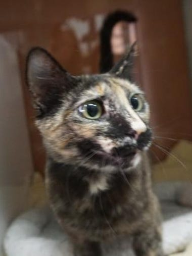 Kana is a stunning tortie with lots of personality.