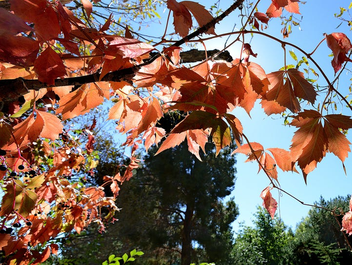 The colors of autumn are beginning in the May Arboretum