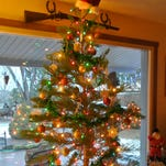 With proper preparation and care, your living Christmas tree can be transferred to your yard after the holidays.