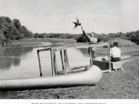 Banding Waterfowl_1952