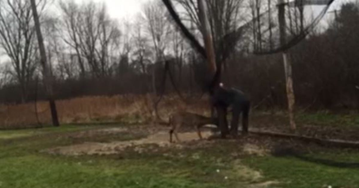 Video: Geauga County tense deer rescue