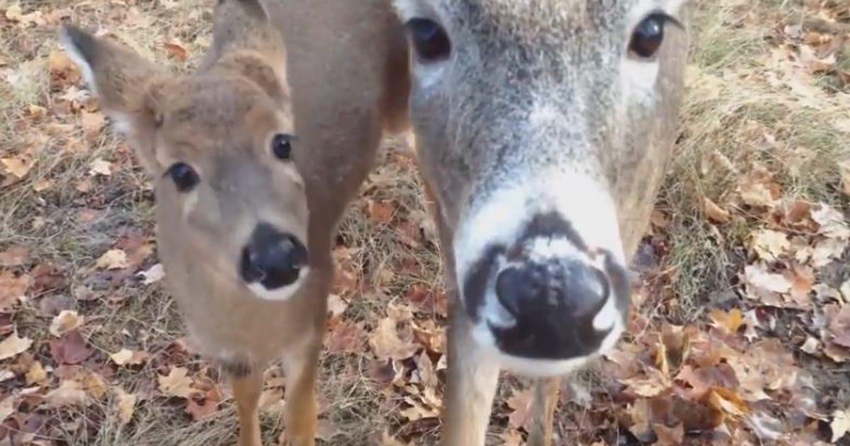Watch live santa s reindeer cam