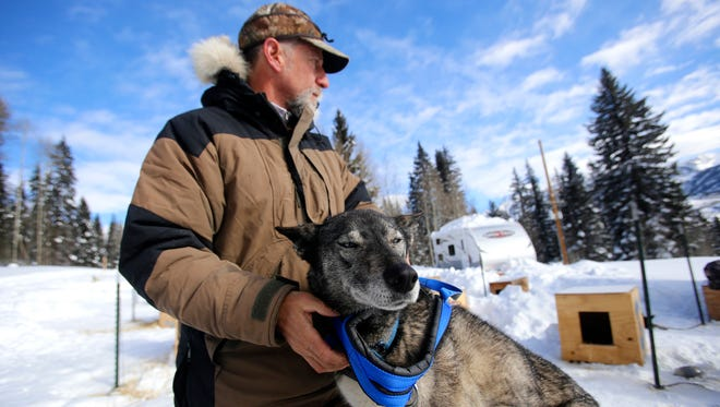 Durango Dog Ranch owner Gregg Dubit places a harness on his dog, Mayday, on Tuesday at the Purgatory Resort kennel north of Durango, Colo.