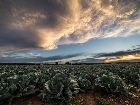 """""""Green Gold"""" photo by Jay Hill on display at the New Mexico Farm & Ranch Heritage Museum through April 2."""