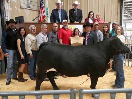 Bailey Carwile, Montgomery FFA, sold the grand champion market steer for $36,000 at the San Angelo Stock Show & Rodeo Premium Sale. Pictured are Kevin Allbright, Auto Wrangler; Brittany Richneau; Raymond Meza, Twin Mountain Fence; Lynn Shipley, H-E-B; Phil Gandy, Gandy Ink; Bill Nikolaus, 1st Community Federal Credit Union; Elaine Jackson; Mike Boyd, First Financial Bank; Joe Self, Automatic Fire Protection; Brie Whitehead-Perks, Rocking Chair Ranch; Shawn Smith, Lone Star Beef.