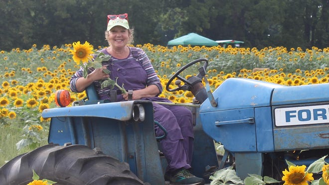 Beth Hubbard, owner/manager of Corey Lake Orchards, with some of the four acres of sunflowers on their property.