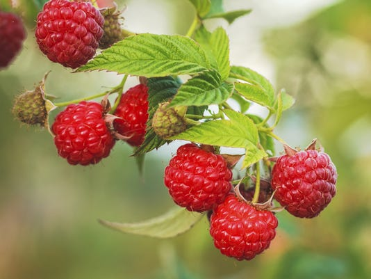 Getty Images Raspberry