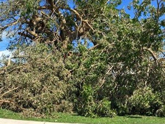 636123955482214434-downed-trees.jpg
