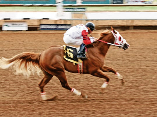 Kiss My Hocks winning last year's Rainbow Futurity Trial.