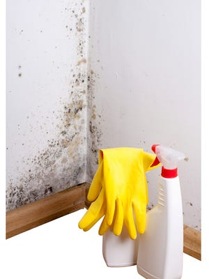 Black mold in the corne. Preparation for mold removal.