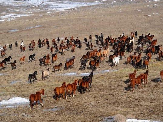 -Starving Horses_Uda2.jpg_20110127.jpg