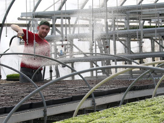 Drew Smith waters freshly sown microgreens in a greenhouse