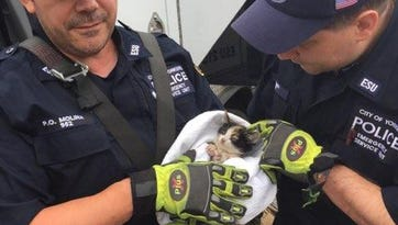 Yonkers cops rescue kitten from storm sewer