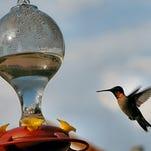 Birds humming along