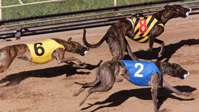 Greyhounds race on the dog track in Dubuque in this 2001 file photo.