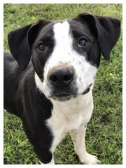 Maya is a 2-year-old, spayed-female border collie mix.
