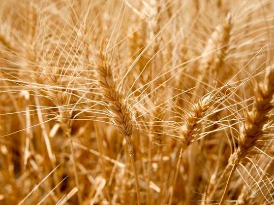 -Harvest 8.jpg_20120719.jpg