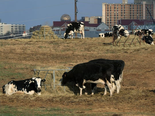 Large animals like cattle and horses can handle temperatures