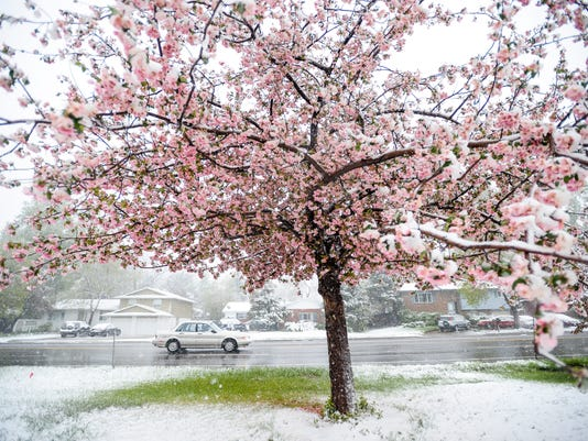 Mothers Day Snow