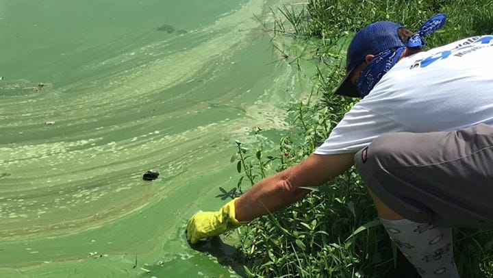 Save Our Water question: Is it safe to breathe near toxic algae blooms?