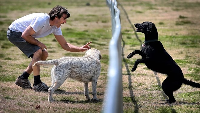 Shaun Marsh tries to coax his wayward dog Luna over the barrier fence after the Labrador bought into the old adage 'the grass is always greener on the other side of the Greensward' during a walk in Overton Park Tuesday afternoon. Memphis Zoo officials threatened Tuesday to withhold their half of the $500,000 needed to design a zoo parking lot expansion, jeopardizing a compromise saving most of the Overton Park greensward.