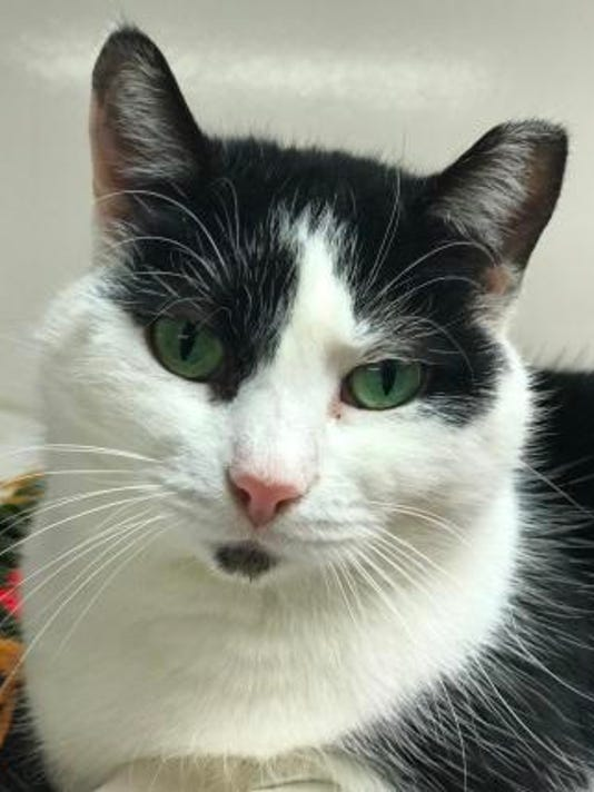 ​East Amwell: Cammi is featured cat  at Tabby's Place PHOTO CAPTION