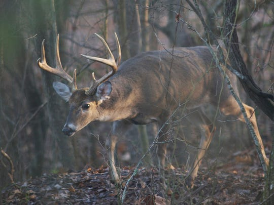 More cases of CWD were found in Mississippi and will change the current management zones.