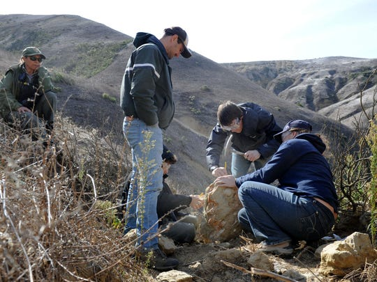 From left, Lulis Cuevas, a park ranger for Santa Rosa Island, watches Ruben Underwood-Aguilar, Jonathan Hoffman (standing), Chris Everett and Tara Redinger as they chip away stone at a site where they found ribs of a sirenian, or sea cow, on Santa Rosa Island.