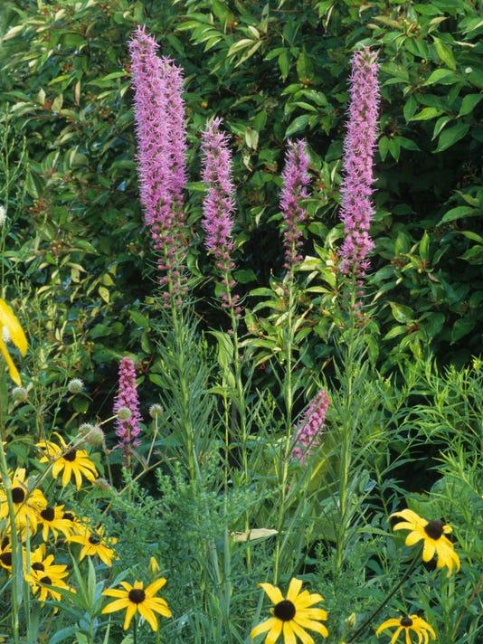 635955497779556015-prairie-flowers-6.jpg