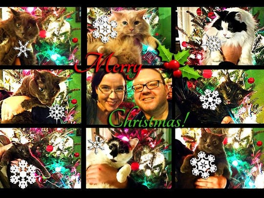 The DiNicolas' 2014 Christmas card. Last year, they had eight cats, but this year, there are 10.