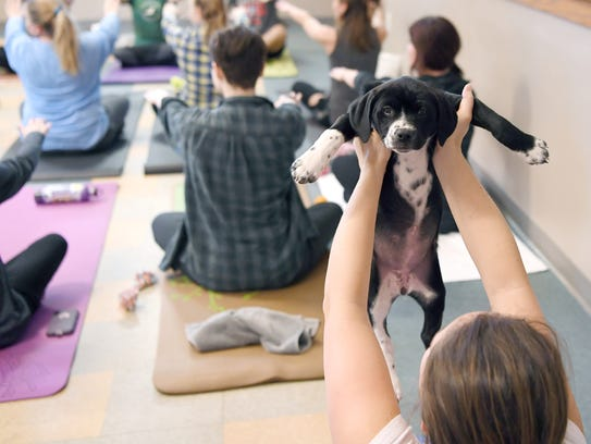 A puppy is held in the air during a Pilates exercise