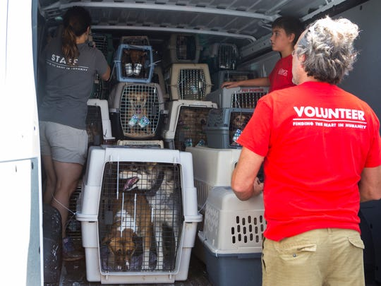 Members of the Brandywine Valley SPCA and other local animal rescue organizations received 160 at risk dogs from overcrowded shelters in Phoenix, Ariz. at the New Castle County Airport. The dogs were flown on a Freekibble flight to find homes in the tri-state area.