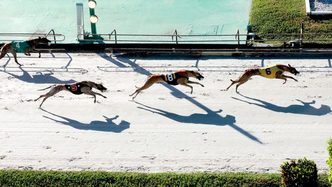 Greyhound racing at the Palm Beach Kennel Club has been suspended due to the coronavirus pandemic.
