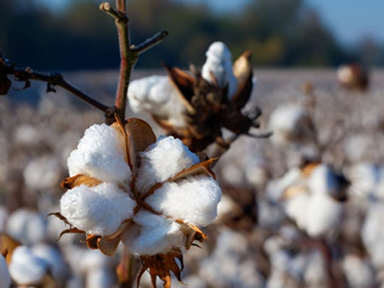 Students at a South Carolina elementary school were told to pick cotton and sing a slave song as part of a class field trip during Black History Month.