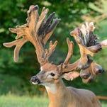 X-Factor, a deer partially owned by Indiana deer farmer Russ Bellar.