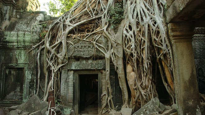 An overgrown tree grows among the ancient ruins of the Ta Prohm temple at Angkor Wat in Cambodia.