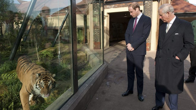 Prince Charles and his son Prince William check out a tiger in the enclosure at the London Zoo, ahead of a meeting to discuss the fight against illegal trade in wildlife.
