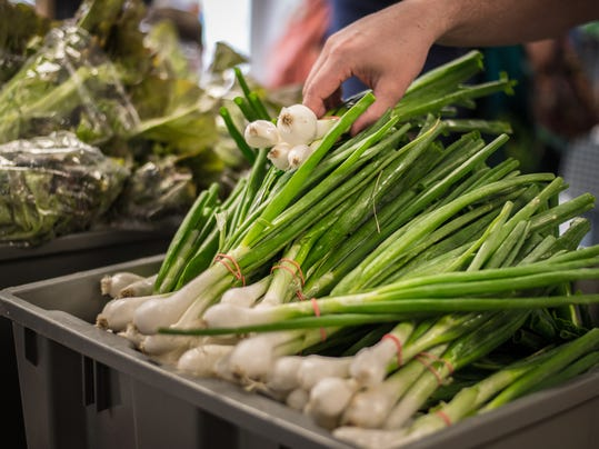 Check out these enormous spring onions at Miller Plant Farm! Photo by Jeff Lautenberger.