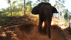 Join the herd: Amazing elephant close ups in 360