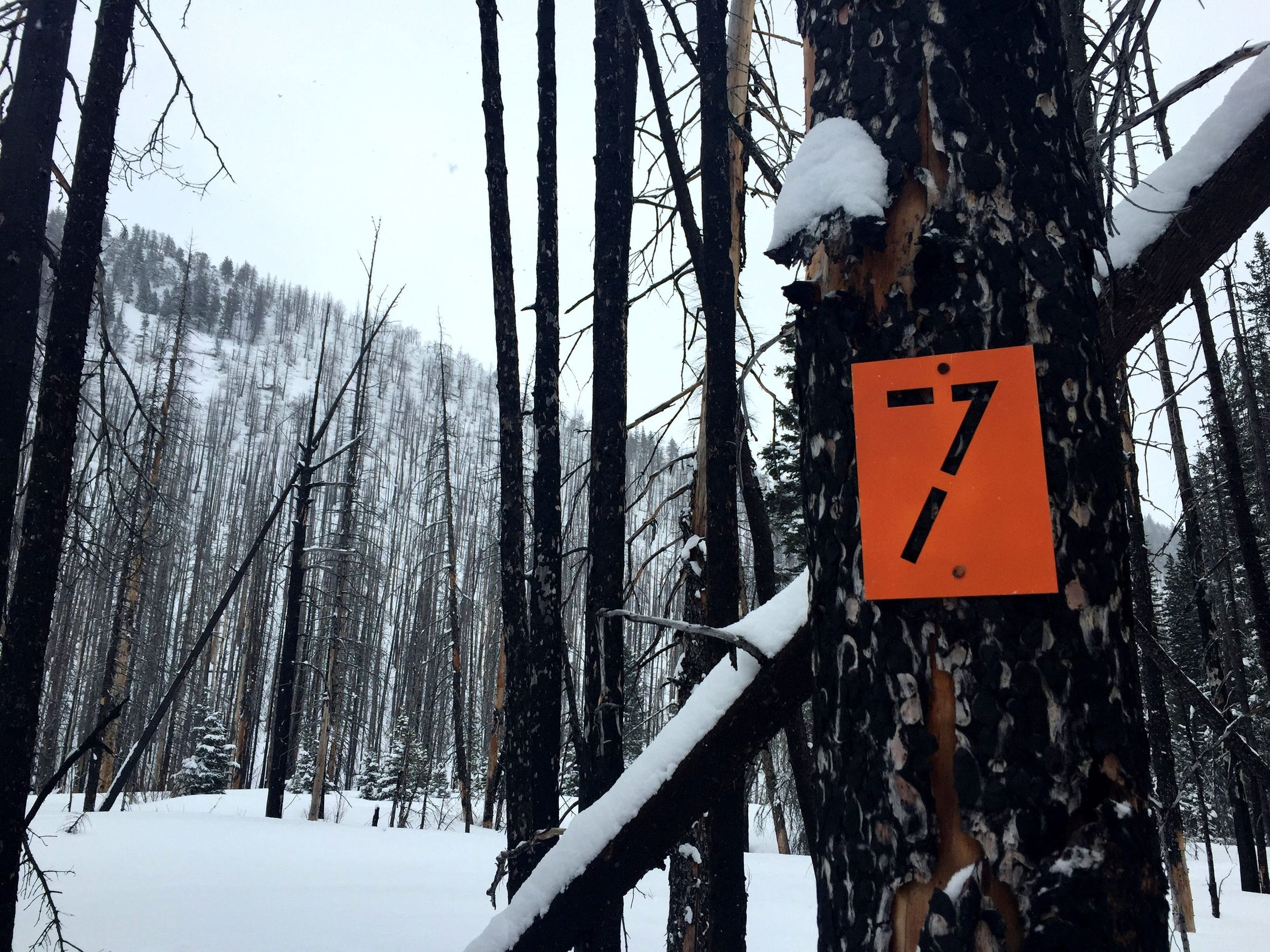 6 Snow survey 6